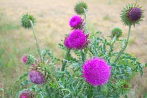 Russell County Noxious Weed Department
